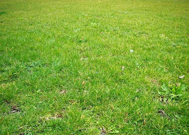 download_free_grass_texture