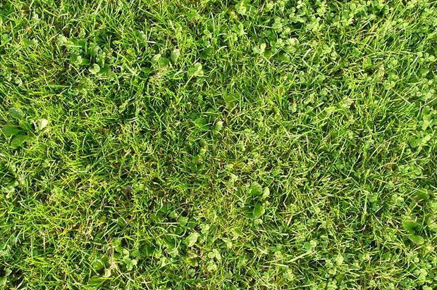 free_high_res_grass_textures