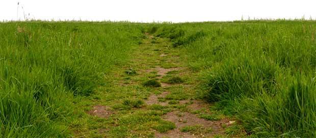 grass_path_texture