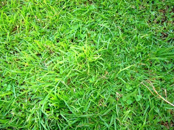 grass_texture_free_photoshop