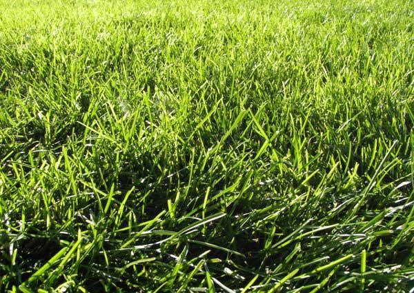 grass_texture_iv