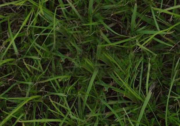 grass_seamless