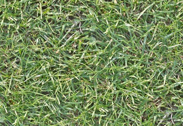 seamless_high_res_grass_texture