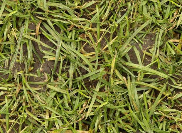 seamless_wet_grass_texture