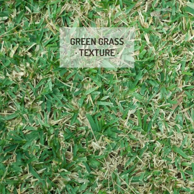 beautiful_grass_textures