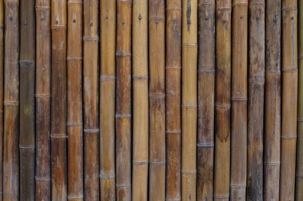 bamboo_wall_house