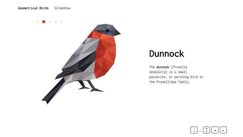 geometrical_birds_slideshow